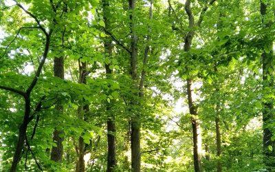Pokračovanie rozhovoru: O vode, pôde a lesoch s Martinom Kováčom